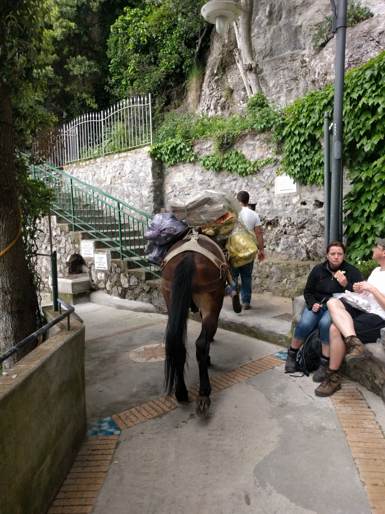 Our small hillside town of Noccelle above Positano uses donkeys to take trash and other heavy things in and out as there are a lot of stairs and no roads!